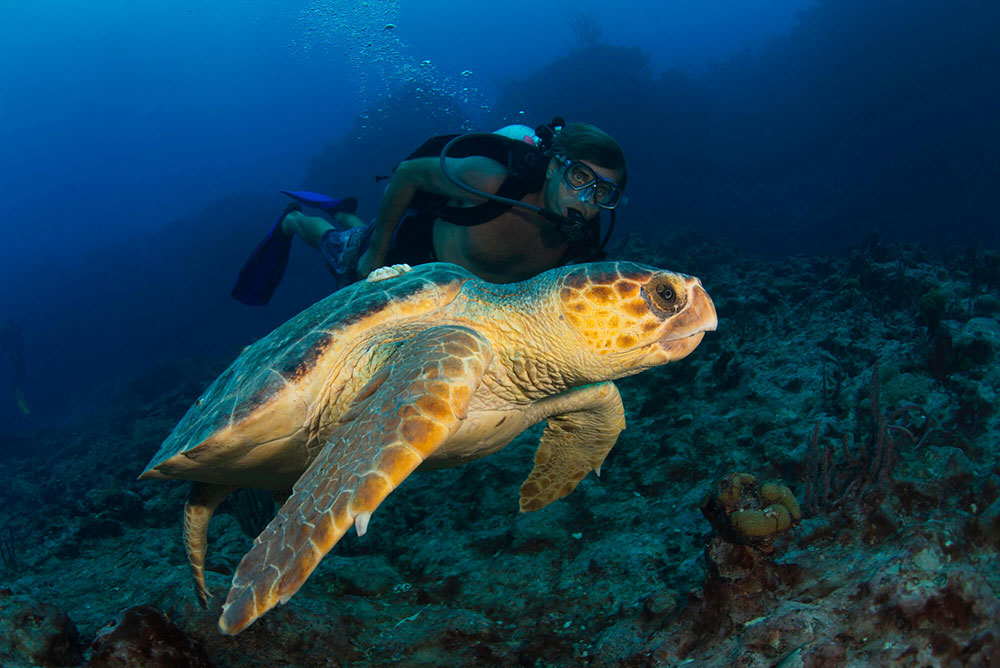 Sea Turtle with a Diver
