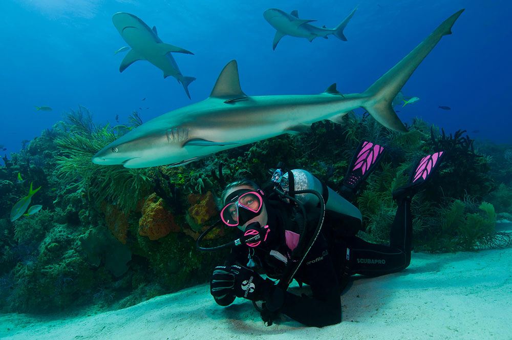 Shark with a Diver
