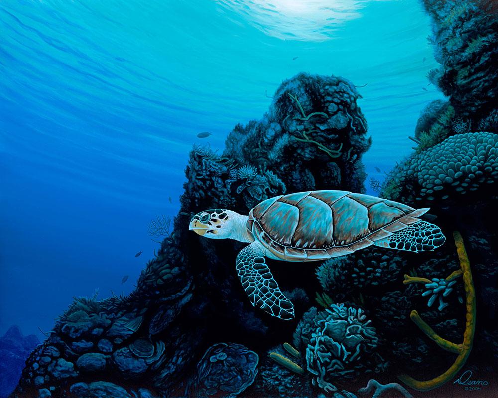 Tortuga Del Mar