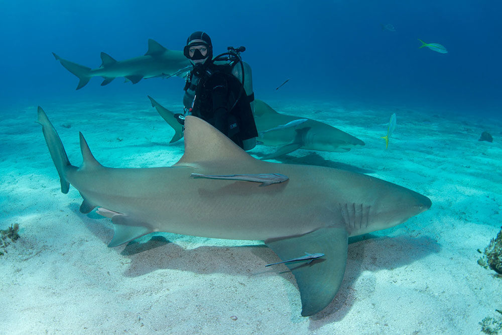 With Enormous Sharks