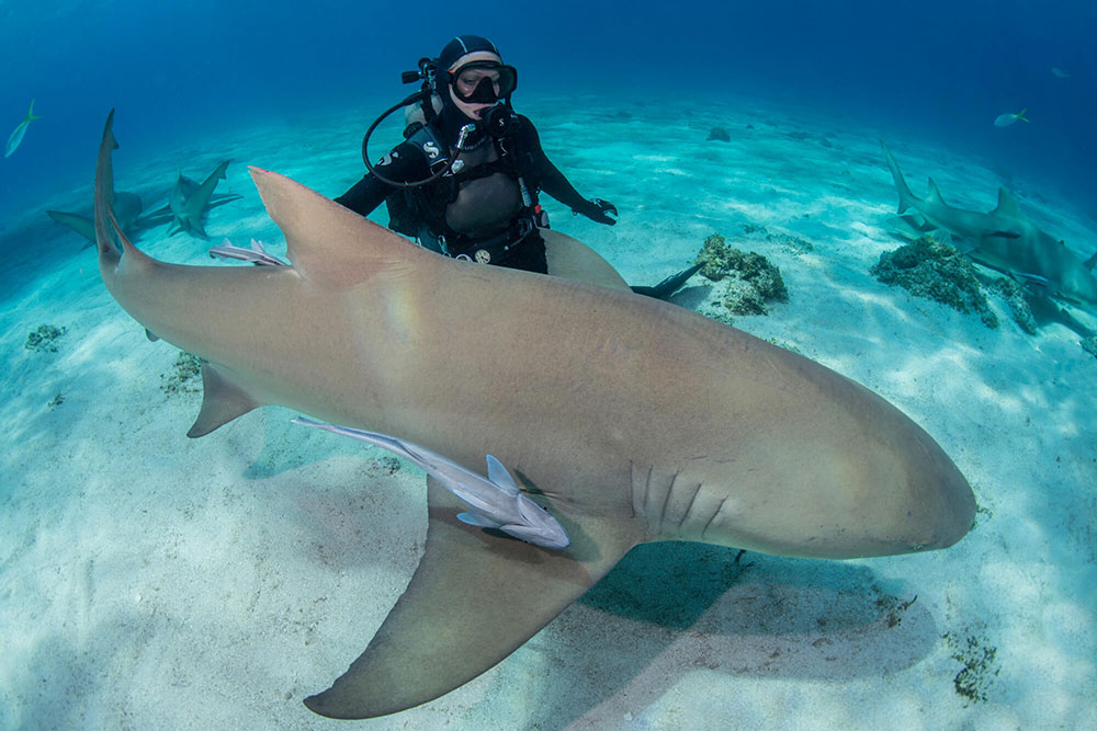 With Enormous Sharks 2