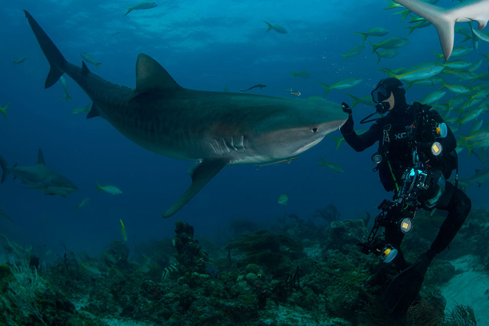 With Enormous Sharks 3