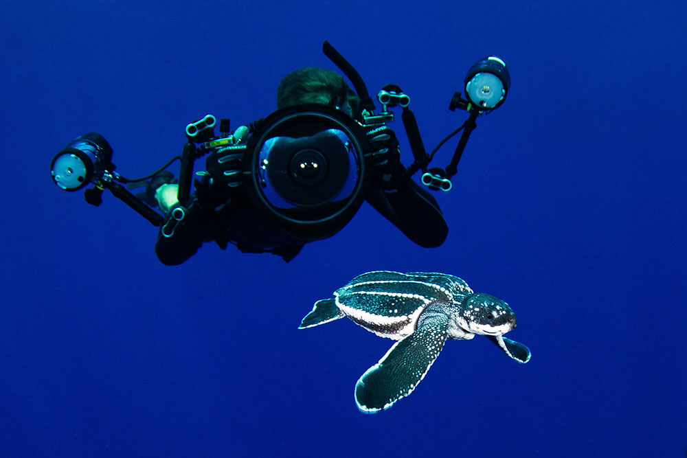With Sea Turtle