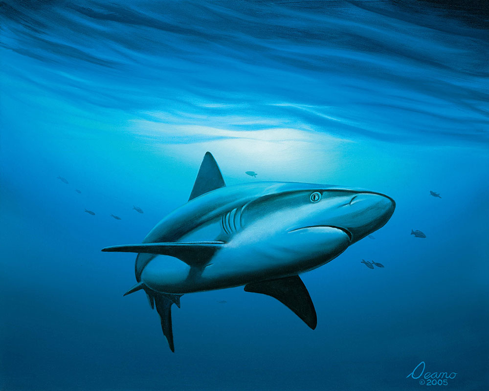 Shark Study 1
