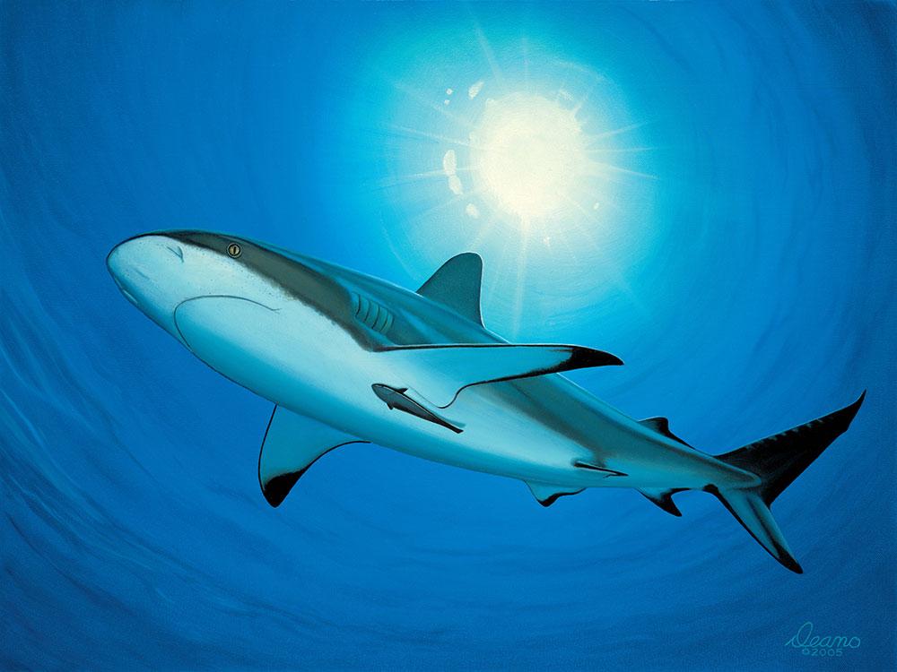 Shark Study 2
